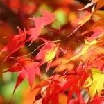 紅葉狩りの楽しみ方☆楽しむための持ち物やうんちくも