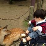 野毛山動物園のベビーカー情報まとめ!スロープや貸出・預かりなど