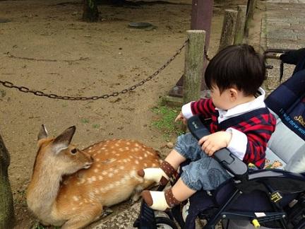 野毛山動物園 ベビーカー
