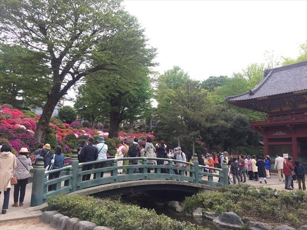 根津神社 つつじ祭り 開花状況