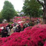 根津神社つつじ祭りの混雑状況を画像たっぷりレポ!所要時間は?